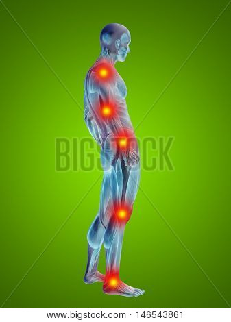 3D illustration of human or man with muscles for anatomy or health designs with articular or bones pain. A male  on green background