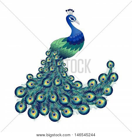 Colorful peacock for your design. Vector illustration