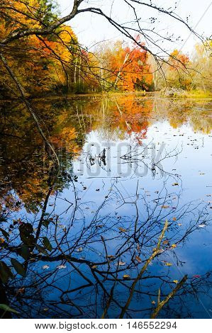 Bare branches in front of colorful autumn trees and a pond.