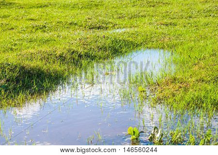 View of a Grass and Puddle With Sky Reflection
