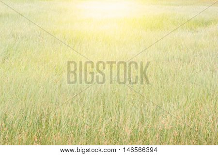Abstract meadow background with grass in the meadow and sunset. Vintage Warm tones.