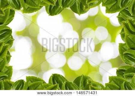 background tree, branch tree, green, Leaves, tree, tree green, twig,limb