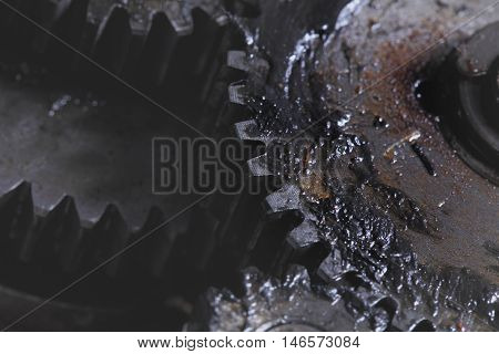 Group of pinions in interaction. Macro photo