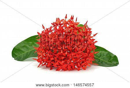 Red ixora with leaf on a white background