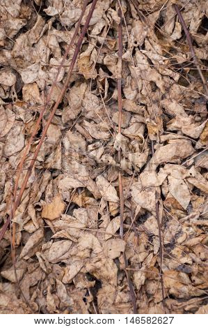 dry leaves on ground in autumn garden