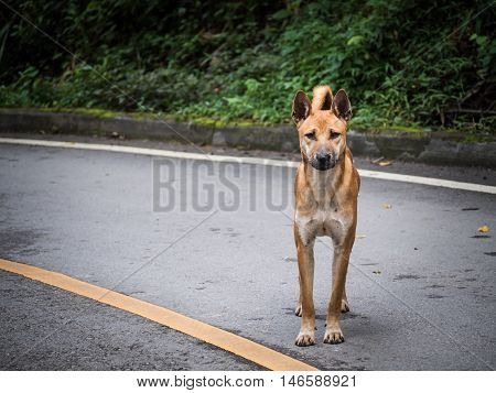 Portrait image of starveling dog appeal a signal 'Do you have some food for me?' from this eyes. Stray dog.