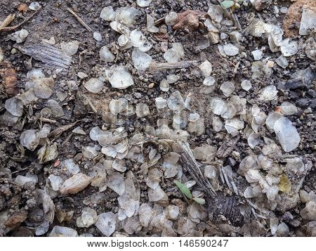 close up Fish scale on the ground