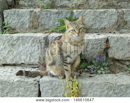 A Lovely Cat Sitting at the Staircase of the Archaeological Site of Delphi, Greece