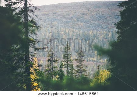 Coniferous Forest Landscape in scandinavian mountains Travel serene scenic view moody weather