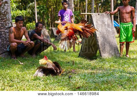 March 22th 2016. Boracay island Philippines. Unidentified people during Philippine traditional cockfighting competition on green grass. Popular sport in asia. Documentary Editorial Image.