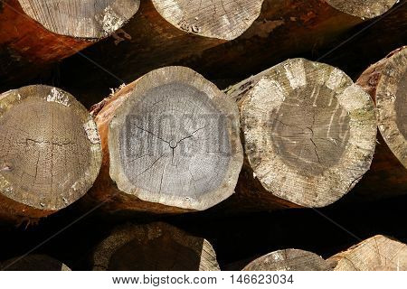 the Trunks of trees cut and stacked