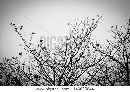 Nature branch tree flower blossom. Nature branch tree. Nature blossom flowers
