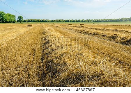 Backlit image of a wheat stubble field with straw bales and ridges. It is a sunny day in the summer season.
