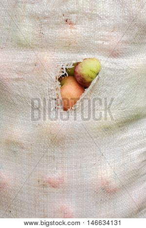full dirty and torn plastic sack of apples