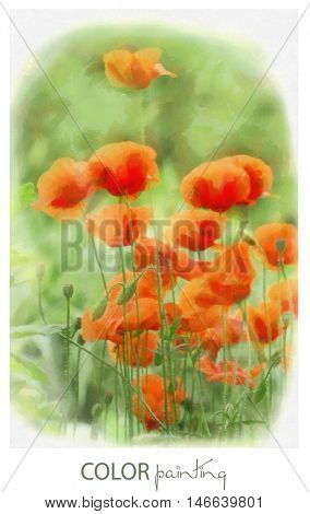Color illustrations. Drawing. Painting. Watercolor. Poppies on a green background