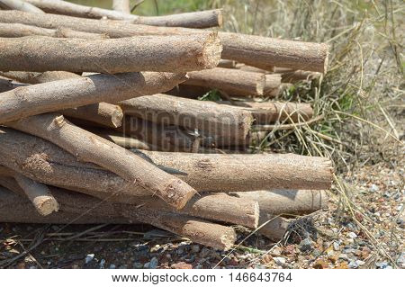 deforested cut tree wood on the ground in garden