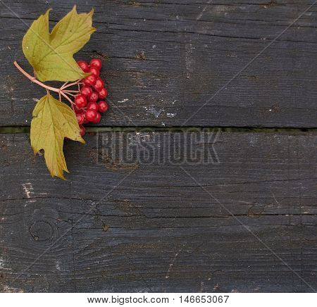 Autumn background with branches of red berries of a Guelder rose or Viburnum shrub on a dark wooden background