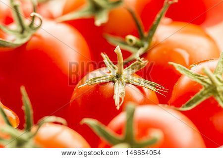Close up of cherry tomatoes. A close up image of ripe cherry tomatoes in bright light.
