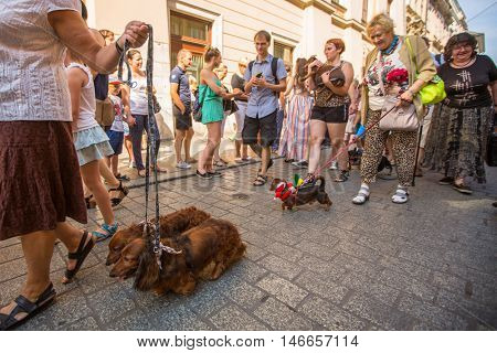 KRAKOW, POLAND - FEB 11, 2016: During annual 22nd Dachshund Parade (Marsz Jamnikow) on the Main Market Square. Parade costumed sausage dogs through Cracow has hosted every autumn since 1994.