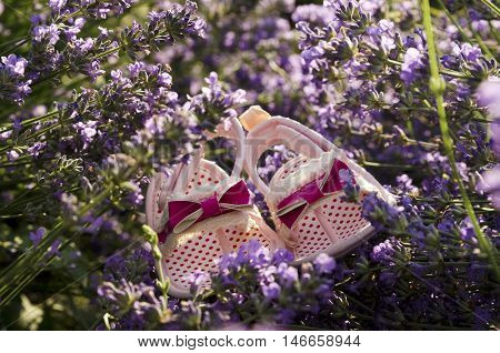 Lavender field and baby girl shoes on a stem