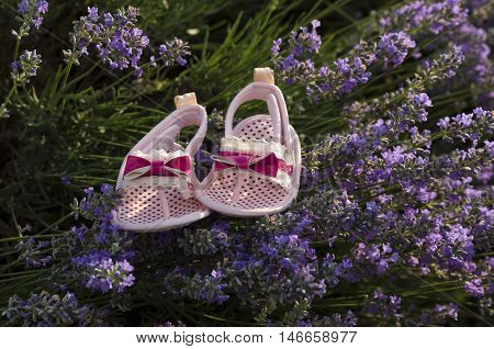 Lavender field and pink baby girl shoes