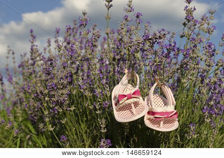 Lavender field in summer and cute baby shoes