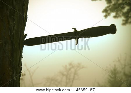 A combat knife stuck in a tree with a mysterious fog in the background.