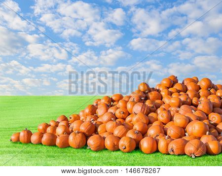 Pile of big orange natural rustic pumpkins. Outdoors stock photo autumn rural scenery on pumpkin patch field with green fresh grass and blue cloudy sky.