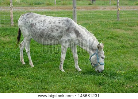 donkey eating grass in meadow green field enclosure