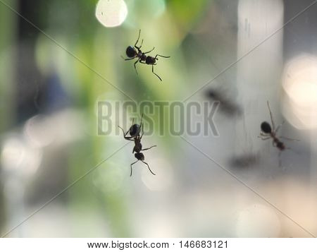 ants crawling on the glass as the background