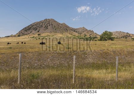 A scenic butte with buffalo grazing on grass.