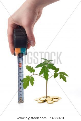 Hand Measures Plant Growth
