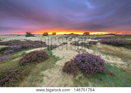 Dunes Grass And Heathland