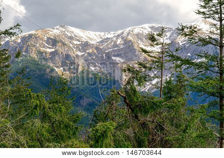 Spring mountain landscape. Trail in the wild forest in Western Tatra Mountains Poland.