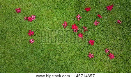 close-up image of fresh spring green grass with a little magenta flower