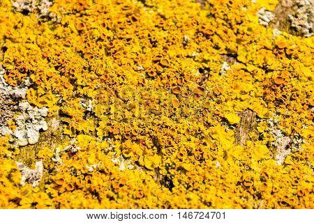 Photo Picture Texture Lichens