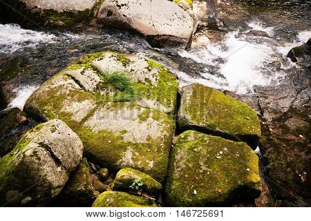Large stones in the river covered with moss in wild forest. Russian Far East.