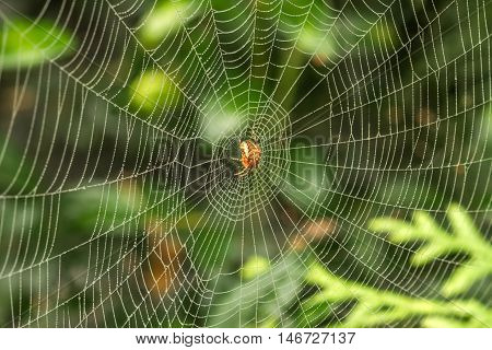 Large Spider Web In The Middle