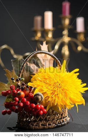 Floral still life with yellow sunflower and orange sorbus in autumn colors on dark background