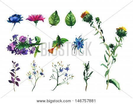 Set of watercolor drawing wild flowers, herbs, floral elements, hand drawn illustration