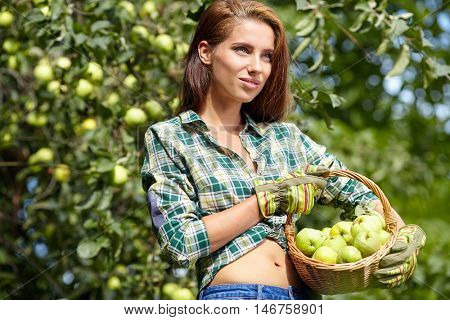 woman is standing with full basket of organic apples in a orchard. Country happy lifestyle concept.
