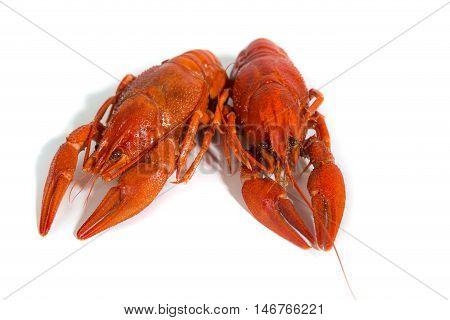 Macro Two Boiled crayfishs on isolate white background