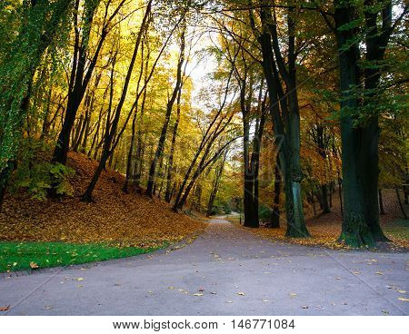 Footpath in the autumn city park with yellow trees