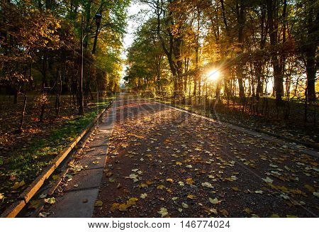Light of the setting sun in the autumn park on the footpath