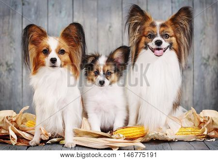 Canine family, mom, dad and puppy. Postcard Rustic