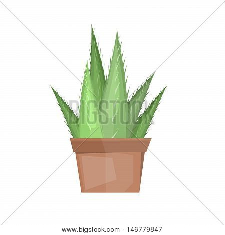 Color cactus isolated on white background. Vector succulent design mexican cactus botany garden cartoon graphic. Nature desert plant green cactus cacti drawing tropical exotic collection.