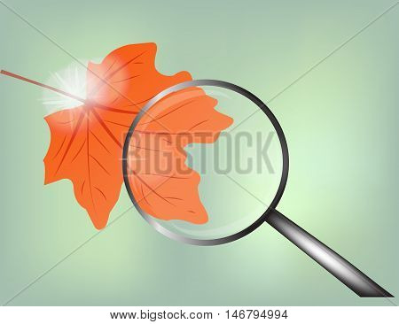 autumn red leaf with loupe on the light green background
