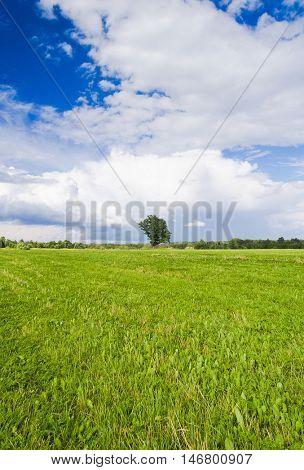 Plain Nature Grass Land
