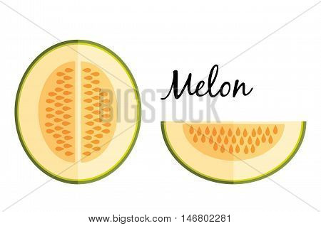 Galia melon in flat design isolated on white background. Isolated on white background. Muskmelon - Galia. Honeydew melon