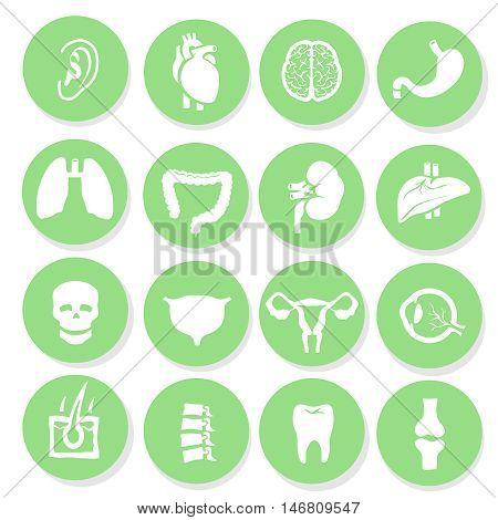 Vector human organs icons set Anatomy simbols